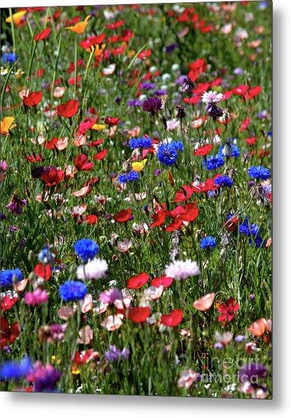 Wild Flower Meadow 2 Metal Print