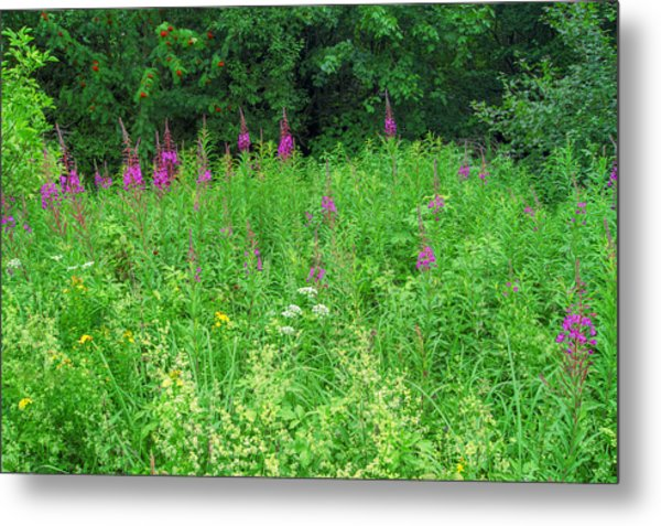 Wild Flowers And Shrubs In Vogelsberg Metal Print