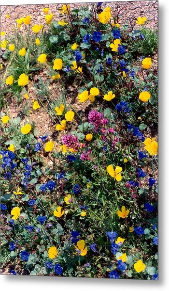 Wild Flowers Metal Print by Eliot LeBow