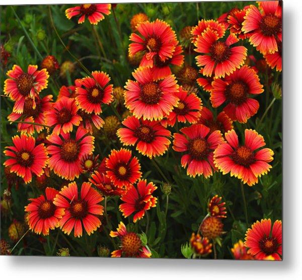 Wild Flowers In Field Color Art Print Metal Print by Randy Steele