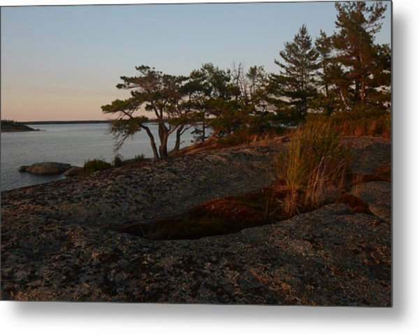 Wild Grass At Sunset - Georgian Bay Metal Print