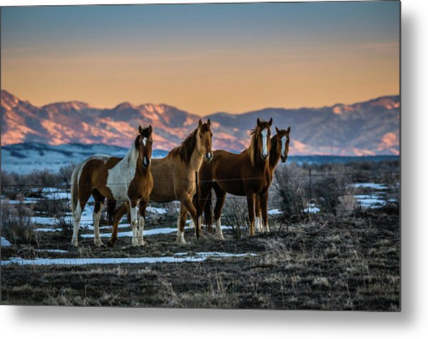 Metal Print featuring the photograph Wild Horse Group by Bryan Carter