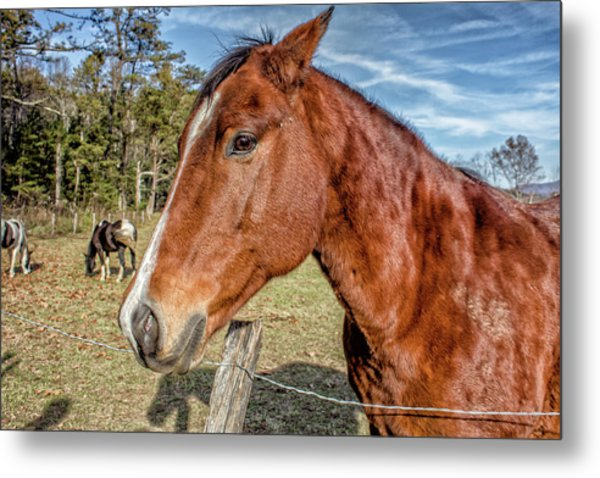 Wild Horse In Smoky Mountain National Park Metal Print