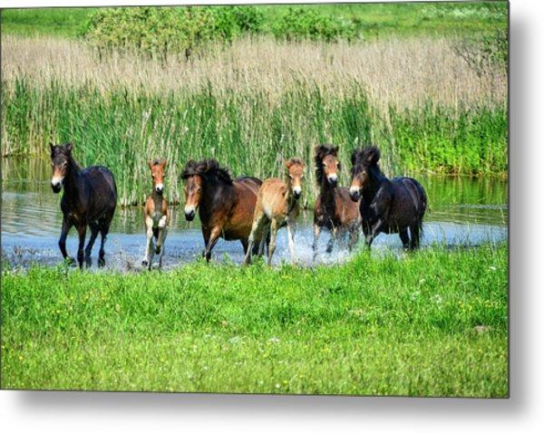 Wild Horses 6 Metal Print