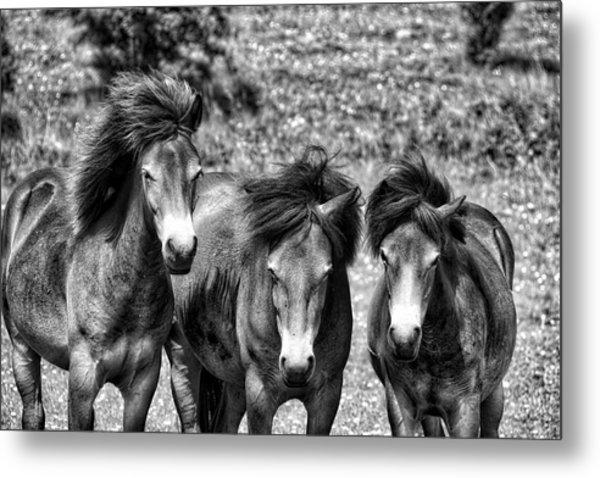 Wild Horses Bw1 Metal Print