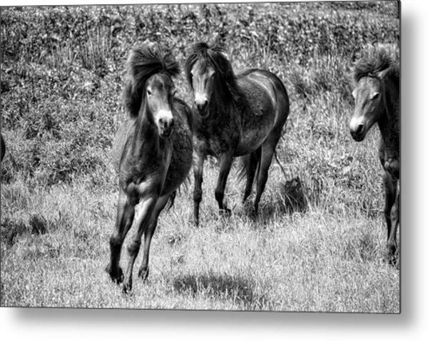 Wild Horses Bw4 Metal Print