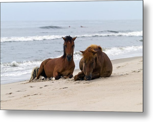 Wild Horses Of Assateague Island Metal Print