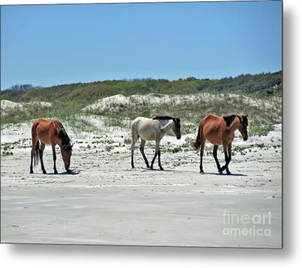 Wild Horses On The Beach Metal Print