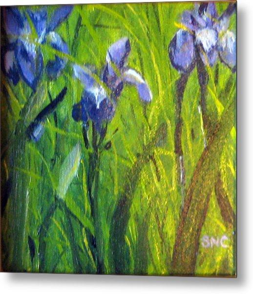 Wild Iris Metal Print by Susan Coffin