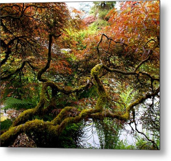 Wild Japanese Maple Metal Print by Sonja Anderson