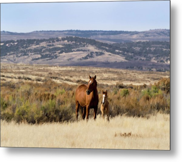 Metal Print featuring the digital art Wild Mare With Young Foal In Sand Wash Basin by Nadja Rider