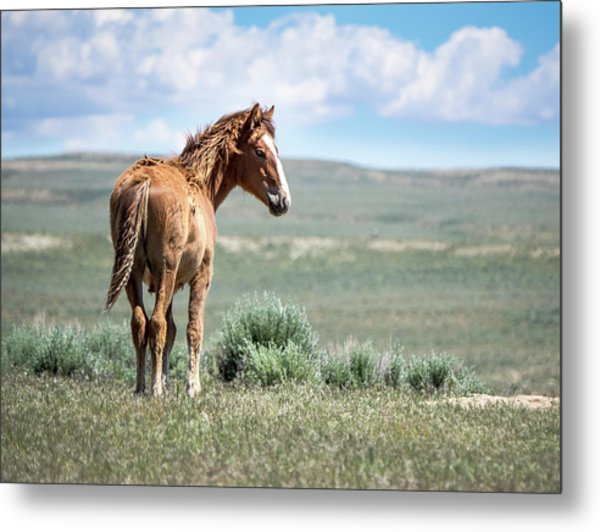 Metal Print featuring the photograph Wild Mustang Colt Of Sand Wash Basin by Nadja Rider