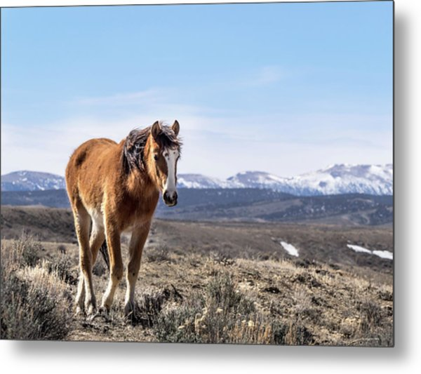Metal Print featuring the photograph Wild Mustang Filly Of Sand Wash Basin by Nadja Rider
