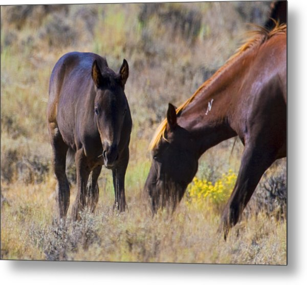 Wild Mustang Foal And Mare Metal Print