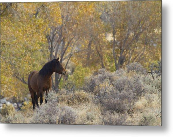 Wild Mustang Horse Metal Print