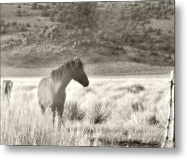 Wild Mustang Of Adobe Valley Eastern Sierra Metal Print