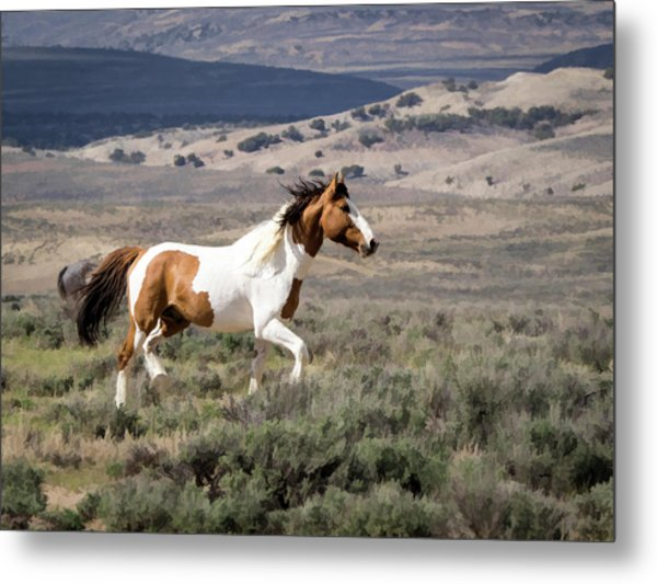 Metal Print featuring the digital art Wild Mustang Stallion On The Move In Sand Wash Basin by Nadja Rider