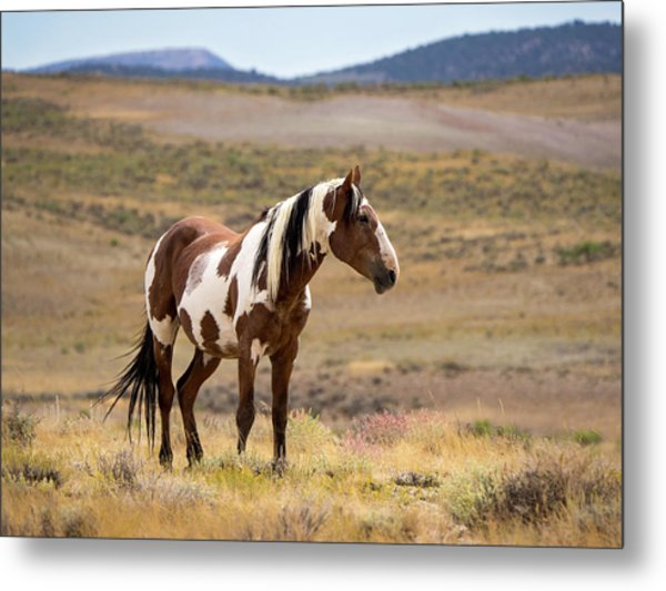 Wild Mustang Stallion Picasso Of Sand Wash Basin Metal Print