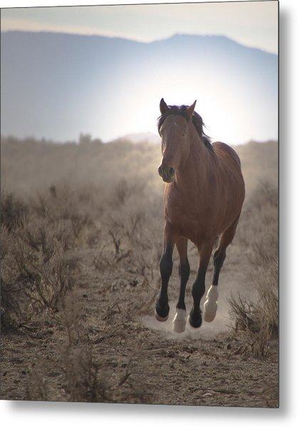 Wild Mustang Stallion Running Metal Print