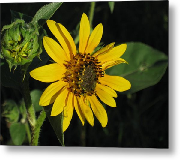 Wild Sunflower Metal Print