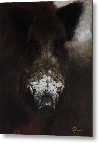 Wildboar With Snowy Snout Metal Print