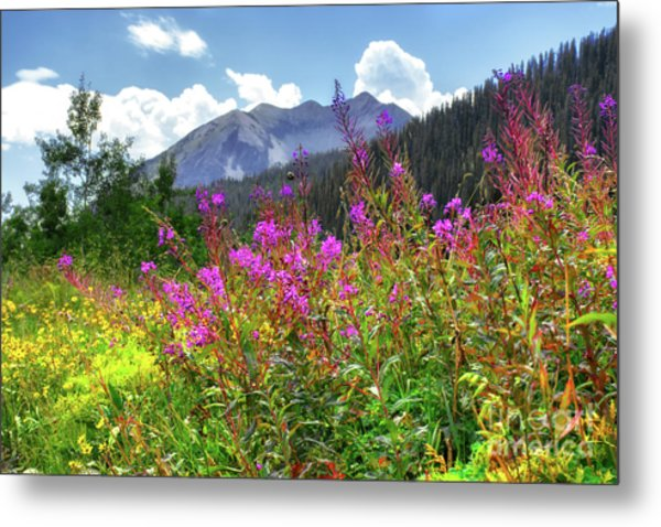 Wildflower Capital Metal Print