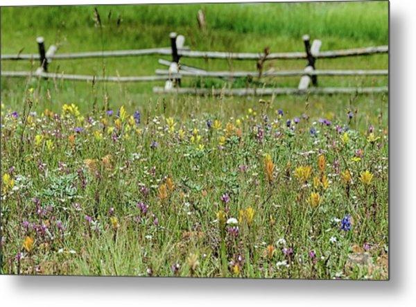 Wildflower Fence Metal Print