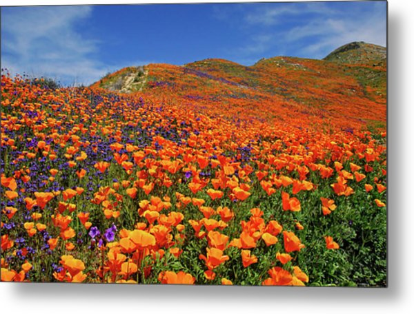 Wildflower Jackpot Metal Print