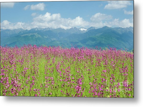 Wildflower Meadows And The Carpathian Mountains, Romania Metal Print