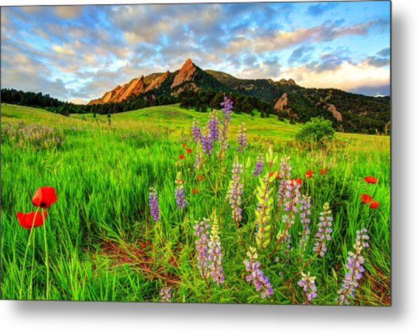 Wildflower Mix Metal Print