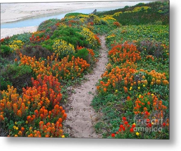 Wildflower Path At Ribera Beach Metal Print