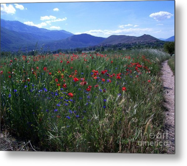 Wildflower Path Metal Print