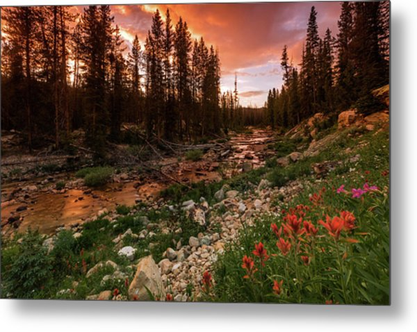Wildflowers Along The Provo River. Metal Print by Johnny Adolphson