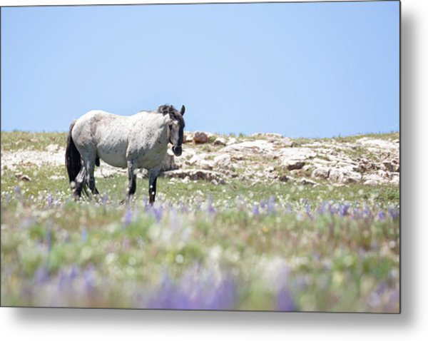 Wildflowers And Mustang Metal Print