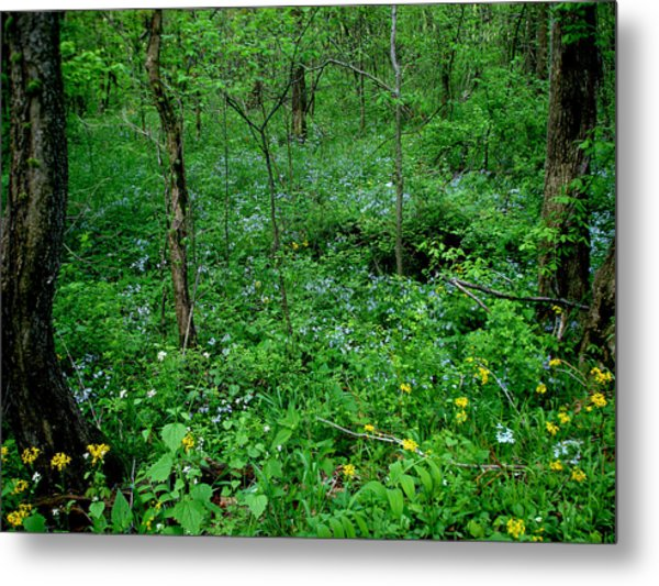 Wildflowers And Woods Metal Print by Martin Morehead