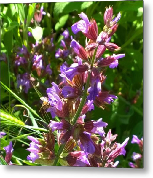 #wildflowers In #purple #country Metal Print