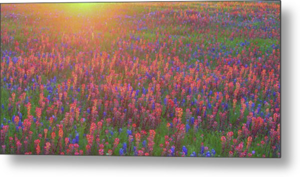 Wildflowers In Texas Metal Print