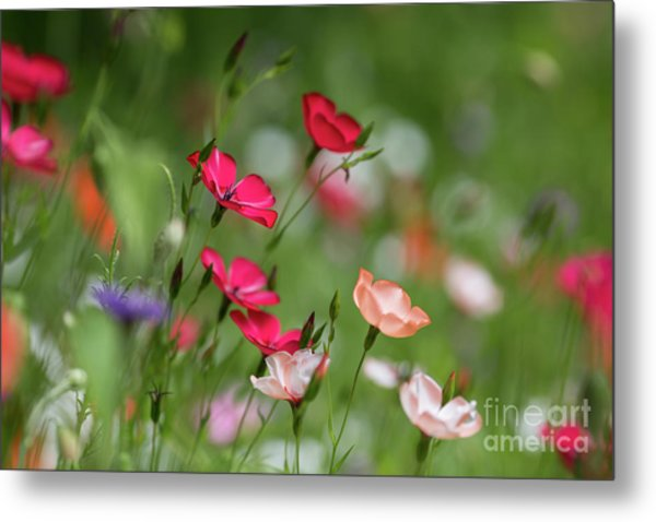 Wildflowers Meadow Metal Print