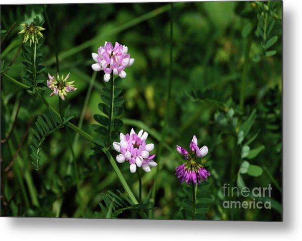 Wildflowers Northford Metal Print