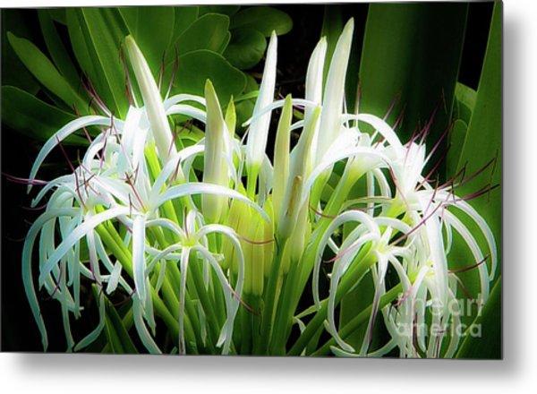 Wildflowers Of Hawaii Metal Print
