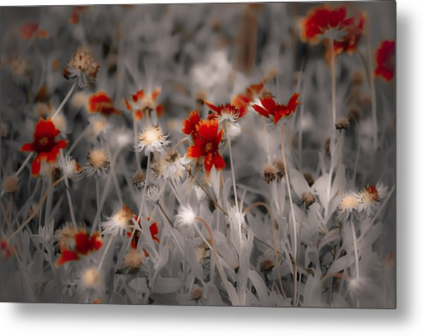 Wildflowers Of The Dunes Metal Print