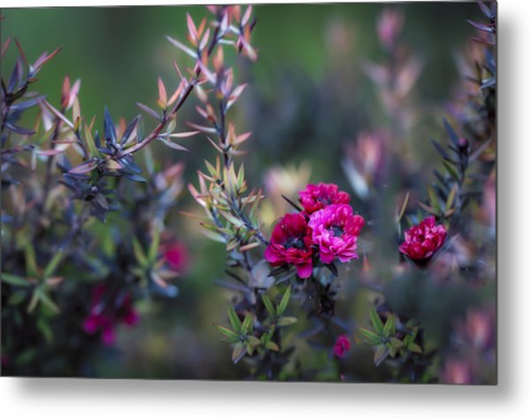 Wildflowers On A Cloudy Day Metal Print