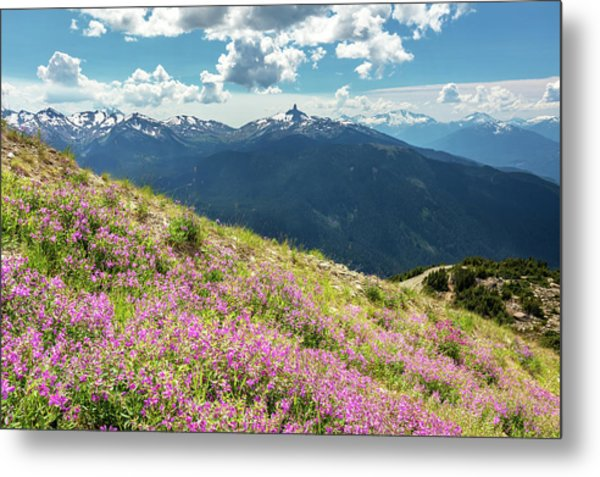 Metal Print featuring the photograph Wildflowers On Whistler Mountain by Pierre Leclerc Photography