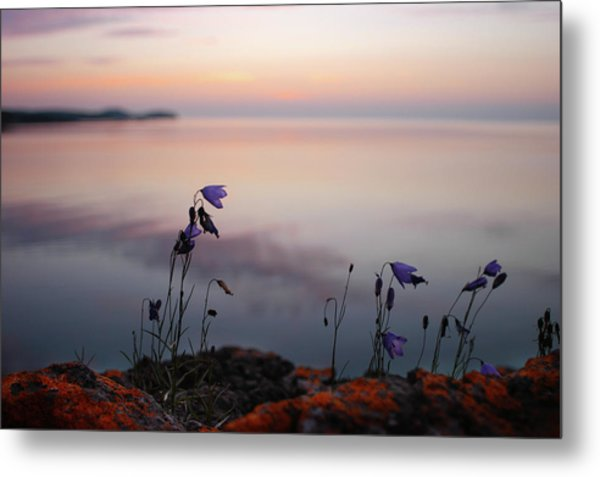 Wildflowers Over Lake Superior Metal Print