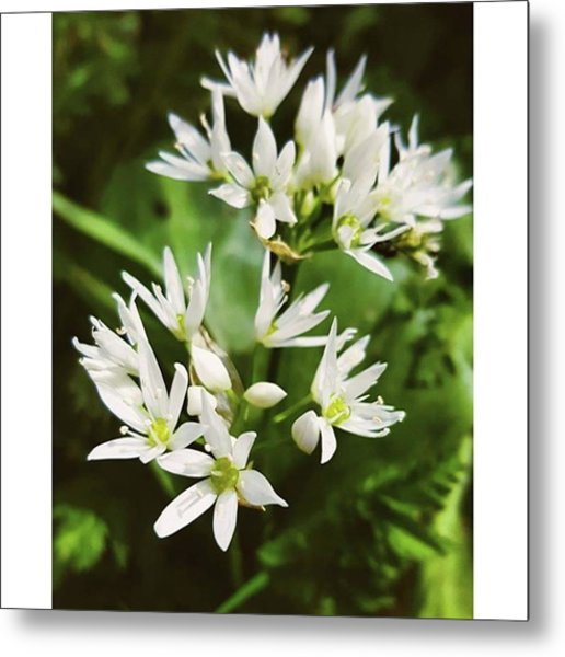 #wildgarlic #flower #woodland #walks Metal Print by Natalie Anne