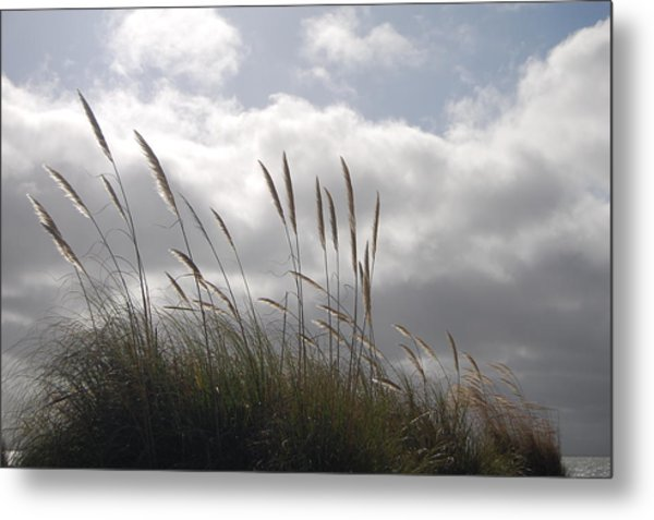 Wildgrass Metal Print by Jean Booth
