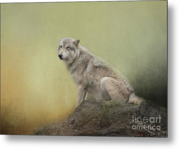 Wildlife Alaska Metal Print