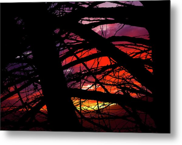 Wildlight Metal Print
