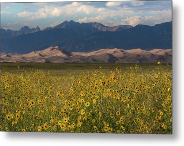 Wild Sunflowers Shine In The Grasslands Of The Great Sand Dunes N Metal Print