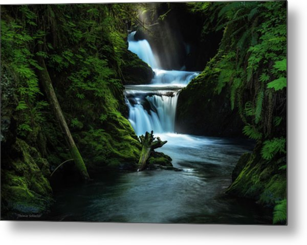 Metal Print featuring the photograph Lush Willaby  by Expressive Landscapes Fine Art Photography by Thom